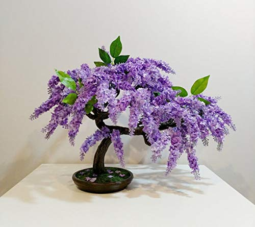 PAPCOOL Jacaranda Mimosifolia for Bonsái - Delonix Flamboyant- Royal Poinciana- 20 SẸẸDS Blue Frạgrant Ornamental Bonsái