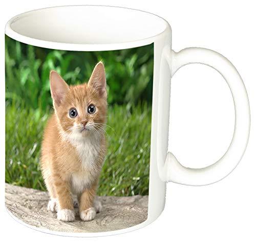 MasTazas Gatitos Gatos Kittens Cats E Tasse Mug