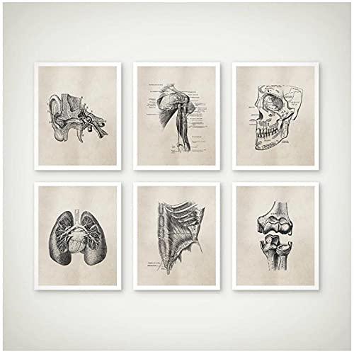 BINGJIACAI Póster Vintage de anatomía humana ilustraciones de anatomía médica lienzo pintura pared arte imagen impresión Doctor Office Decor-30x40cmx6 sin marco