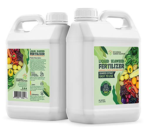 Eco Home & Garden Indoor Plant Fertilizer | Organic Indoor Plant Food Made from Liquid Kelp Seaweed Extract | Great Vegetable Liquid Fertilizer & House Plant Fertilizer Indoor (1 Liter)