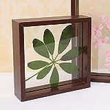 Marco de fotos transparente creativo, marco de madera para muestras de flores de...