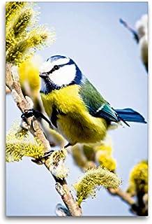 CALVENDO Lienzo Premium de 60 cm x 90 cm de Alto, una pequeña Viva Flor de Hierro en un árbol de Sauce, Imagen en Bastidor, Imagen premontada (Cyanistes caeruleus) Animales, Animales