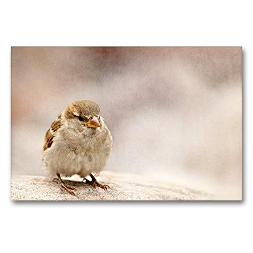 Calvendo Premium Lienzo 90 cm x 60 cm Horizontal, pequeño Tesoro Imagen de Pared sobre Bastidor, Listo para Lienzo auténtico, impresión en Lienzo: pájaros de Verano Animales