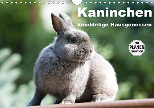 Kaninchen - knuddelige Hausgenossen (Wandkalender 2021 DIN A4 quer)