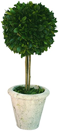 Best preserved boxwood ball 16 inch for 2020