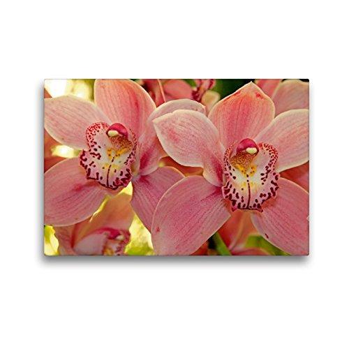 Premium Textil-Leinwand 45 x 30 cm Quer-Format Orchideen | Wandbild, HD-Bild auf Keilrahmen, Fertigbild auf hochwertigem Vlies, Leinwanddruck von Klaus Lielischkies