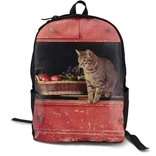 Rucksack mit Katzenbox, Klettern, Schulranzen, Büchertasche, Reisen, Laptoprucksack für Kinder, Studenten, Erwachsene