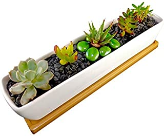 COZYHOME ESSENTIALS Succulent Planter - 11 Inch Long, Rectangle, White, Mini Ceramic Plant Pot with Bamboo Tray for Propagating and Growing Baby Succulents or Mini Cactus and Other Small Plants.