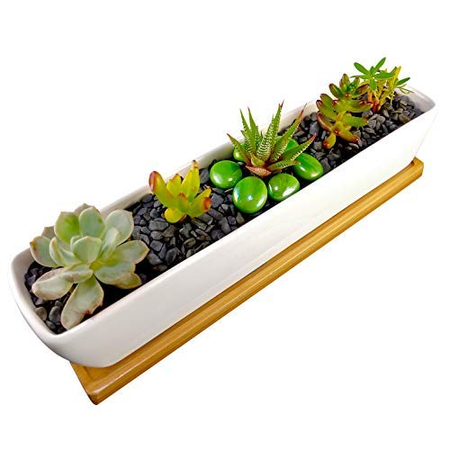 Ceramic plant pots with bamboo tray