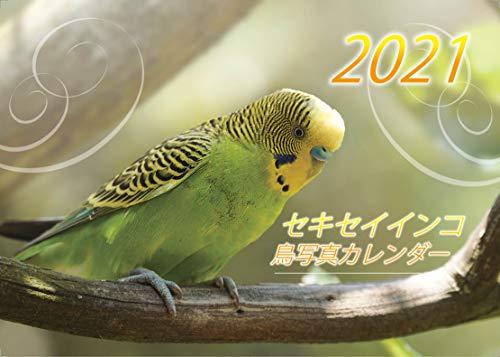 【Amazon.co.jp 限定】セキセイインコ・鳥写真カレンダー 2021 (B6サイズ。ワンタッチで卓上にも壁掛けにもなる3Wayカレンダー)