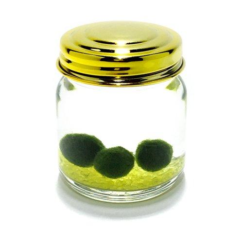 キラキラ瓶まりも(ガラス瓶・金属蓋)イエロー【水道水で育てられる養殖まりも3個入り】