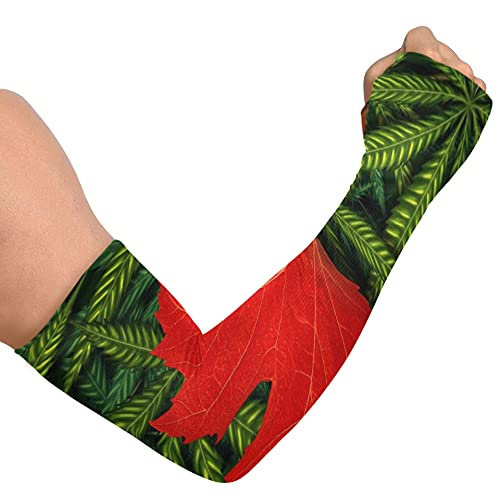 AQQA Mangas de Brazo atléticas para Mujeres Concepto de Marihuana Canadiense y Ley de Cannabis de Canadá UV Que Cubre los Brazos Protección contra Rayos UV Enfriamiento Brazo de Seda de