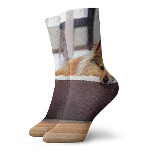 Socks Calcetines Nette Hund Calcetines cortos unisex para adultos que absorben la humedad atléticos para correr, fitness, viajes, trabajo