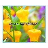 ブラック:フラワー盆栽の種50個サンダーソニアの種、サンダーソニア、希少価値のある花!ホームガーデニングDiy輸入種