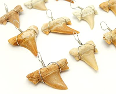 Wire Wrapped Fossilized Shark Teeth for Necklace - Shark Tooth Charm Pendant