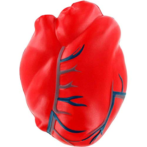 Heart with Veins Stress Ball - Healthcare Anatomy Stress Ball - http://coolthings.us