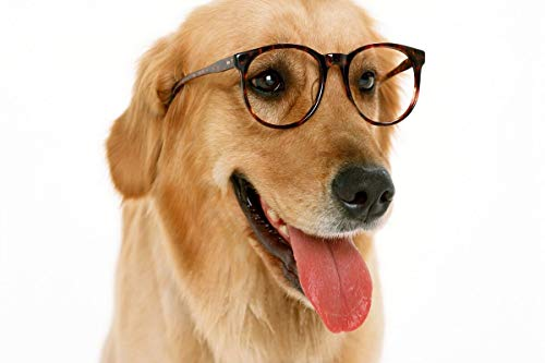 Douwert Lindo Cachorro con Gafas, Arte de Pared para decoración de habitación, decoración del hogar, Lienzo, Pintura, póster de Animales, impresión sin Marco 40x50cm