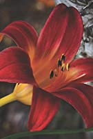 My Life, My Thoughts, My Journal: JD Dyola's Celebration of Life Collection™ (In Celebration of Flowers—Lilies) (Volume 3)