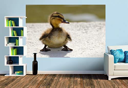 Premium Foto-Tapete Ein niedliches Küken (versch. Größen) (Size M | 279 x 186 cm) Design-Tapete, Wand-Tapete, Wand-Dekoration, Photo-Tapete, Markenqualität von ERFURT