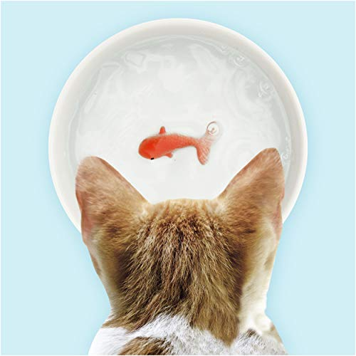 Fishs Water Bowl Uk