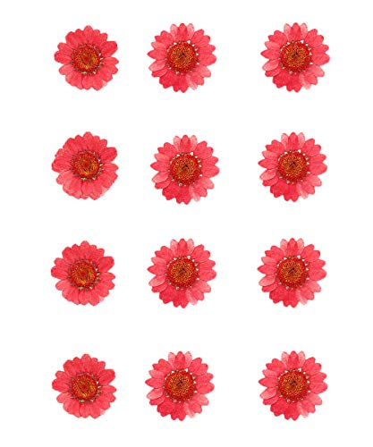60Pcs Real Dried Pressed Flowers, Dried Daisy Flowers for Art Craft DIY, Natural Dried Flower for Resin Soap and Candle Making (Red, 5 Pack of 12)