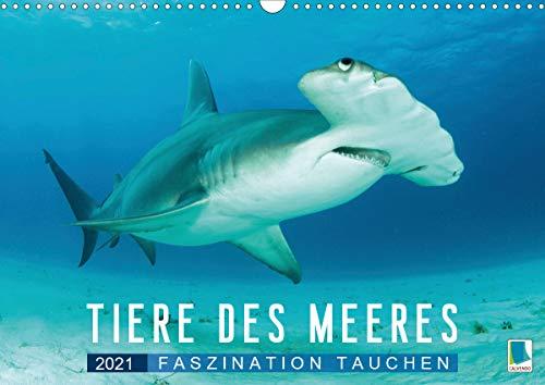 Tiere des Meeres: Faszination Tauchen (Wandkalender 2021 DIN A3 quer)