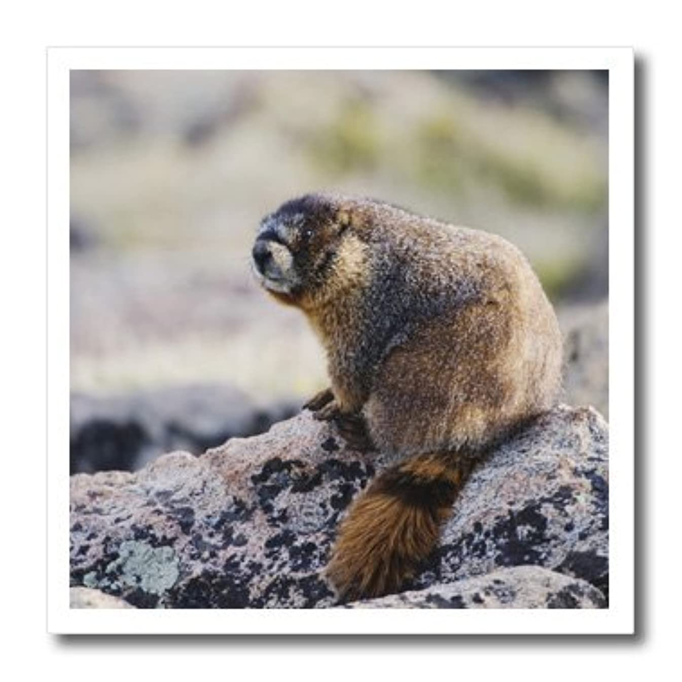 3dRose ht_84655_3 Bellied Marmot Wildlife Rocky Mountain Rolf Nussbaum Iron on Heat Transfer Paper, Yellow