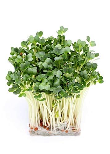 PLAT FIRM Germination Les graines: BIO Germination - Radis - semences biologiques certifiées - 1700 graines