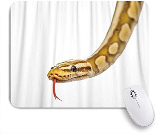 HUAYEXI Stoff Mousepad,Python isoliert auf Weiß,Rutschfest eeignet für Büro und Gaming Maus