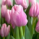 Tulipanes bulbos jardín de flores plantación en macetas flores decorativas de interior y exterior flores raras especies raras enérgico-15 bulbos,C