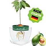 AvoSeedo Avocado Tree Growing Kit with Pot, Green & Clear, Practical Gifts for Women, Mom, Sister, Best Friend & Kids, Plant Indoors with Novelty Pit Grower Boat & Kitchen Garden Seed Starter