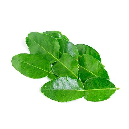 Fresh Makrut (Kaffir) Lime Leaves - 0.5 oz