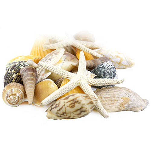CYS EXCEL Seashell Assorted Mix with Pencil Finger Starfish (Approx. 30 PCS, 2'-3')   Nautical Décor Vase Fillers   Beach Decoration Seashells