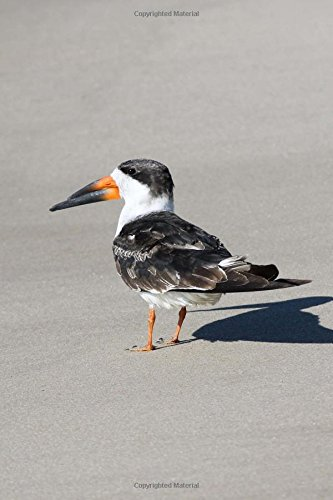 Black Skimmer (Rynchops Niger) in Florida Bird Journal: 150 page lined notebook/diary