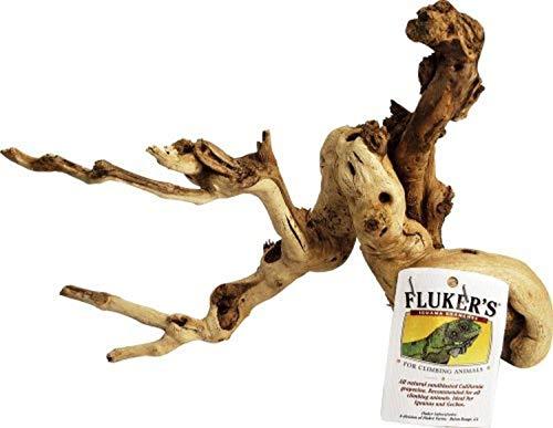 Fluker's Iguana Branch
