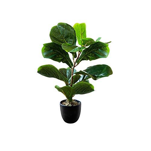 planta sansevieria fabricante Royal Imports