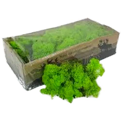 Reindeer Moss Lichen - Natural Preserved Dried - 500 Grams - Spring Green