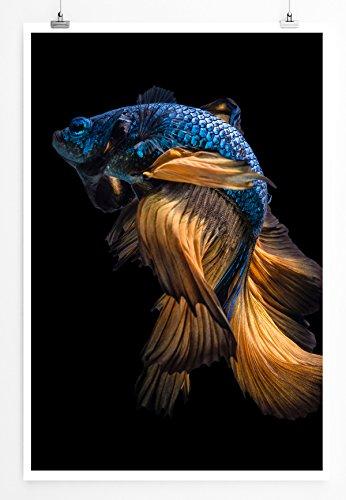 Eau Zone Home Tableau pour Animaux – Impression Photo de Campagne Siamois Bleu, Poster en véritable Papier Photo 60 x 90 cm roulé, Poster 90x60cm