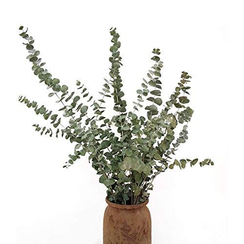 10 ramas de flores de eucalipto nórdico secas, únicas y elegantes para decoración del hogar o de boda.