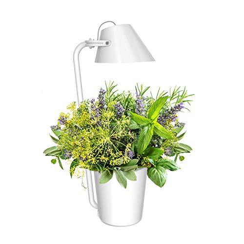 Preisvergleich Produktbild Innengarten LED Hydroponics Gardening Kit,  Pflanzen Hydrokultursystem Dimmbarer Tischlampe,  Pflanzenlampen Wachstumslicht Pflanzkorb mit Pflanzschwämme & Nährlösung,  Samen nicht enthalten(Weiß)