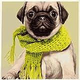 Animal Lindo Perro Pug En Babero Verde﹣Diy 5D Kit De Pintura De Diamante,Diy 5D Diamond Painting,Manualidades Para Decoración De Pared﹣30X30Cm(Sin Marco)