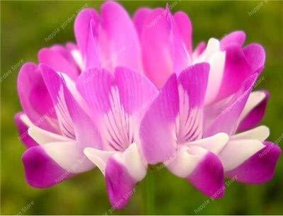 SANHOC Versandkosten 100 Stück Stück Chinese Astragalus Sinicus Purple Flower Bonsai Garten Vier Jahreszeiten Blume Pflanze Säen Einfach: 7