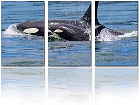 SALIZEN Killer Whale mom with Calf Southern Resident Killer Whales L91 and 3 Pieces Wall Art product image