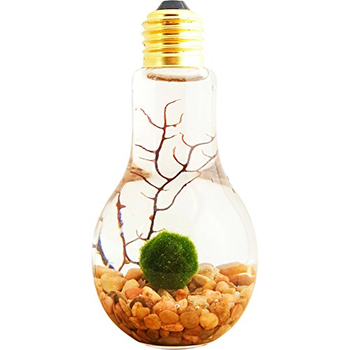 Lightbulb water terrarium