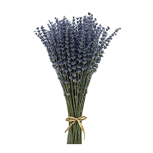 DSTDM Künstliche Blumen, Blumenkunst, Getrocknete Blumenstrauß, Getrocknete Lavendel Bündel Lavendel stammt dekorative trockene Lavendelblumen für Wohnkultur, Handwerk, Hochzeitsblumensträuße
