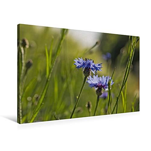 Premium Lienzo 90 cm x 60 cm horizontal, flores de grano – Pure fascinación en azul imagen de pared, imagen sobre bastidor de lienzo real (calvento natural)
