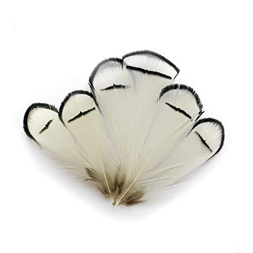 LWINGFLYER White Pheasant Feathers for Craft Plumage Feather for Home Wedding Decoration 2-3.5 inch 100pcs