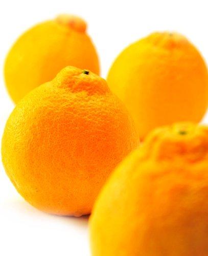 果物 ギフト デコポン 5kg 完熟 甘い みかん
