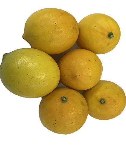 【防腐剤・ワックス不使用】三重県産(国産メイヤーレモン 1kg )青果