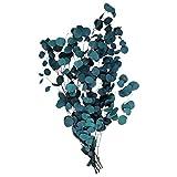 Angoily Ramas de Eucalipto Preservadas Ramas de Eucalipto Secas Artificiales Tallos Hojas de Eucalipto Artificiales para Flores Corona de Otoño Fiesta en Casa Decoración de La Boda (Azul)